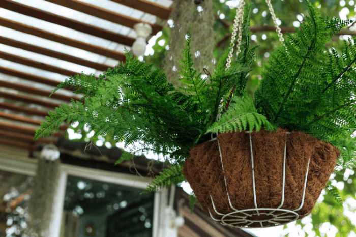 Freshen Up Your Curb Appeal with Ferns: How To Hang Ferns on Your Front Porch